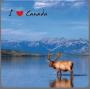 TMS-001-Lake&Moose